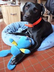 Bahia, chien