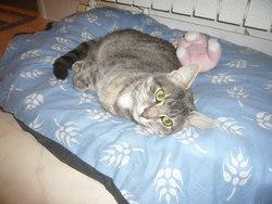 Noe, chat Gouttière