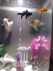 4 Fish, autres