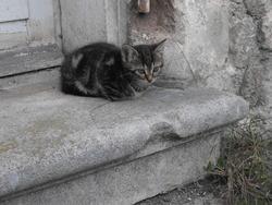 Tékilla, chat Gouttière