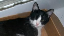 Edvina, chat Gouttière