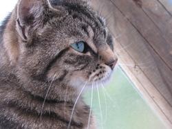 Diablo, chat Gouttière