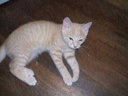 Sangoku, chat Gouttière