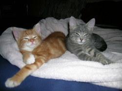 Simba Le Petit Roux, chat
