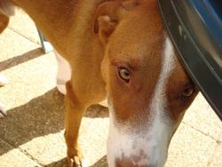 Tobby, chien