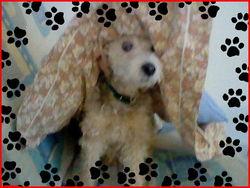 Manon, chien