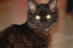 Narnia, chat Gouttière