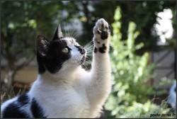 Lolotte, chat Gouttière