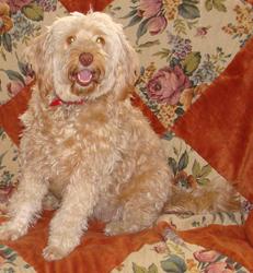 Duchesse, chien
