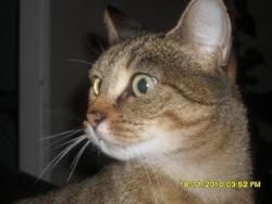 Ninitte, chat Gouttière