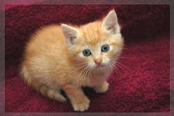 Caruso, chat Gouttière