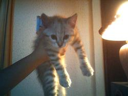 Canaille, chat