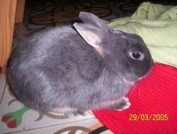 Figaro, rongeur Lapin