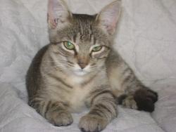 Micio, chat Gouttière