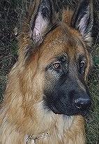 Dra'ko, chien Berger allemand