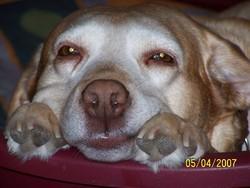 Olgane, chien