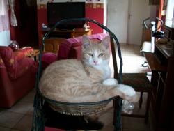 Kofi, chat Gouttière