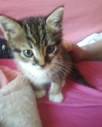 Pimouse, chat