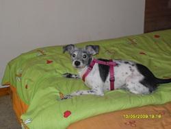 Niko, chien