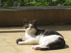 Fripouille, chat
