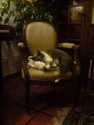 Boulie, chat