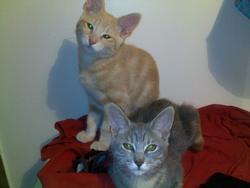 James Et Jessy, chat Gouttière