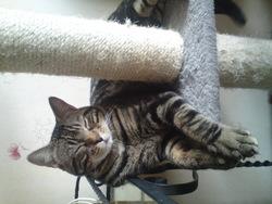 Prosper, chat Gouttière