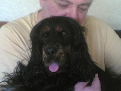 Bradley, chien Cocker anglais