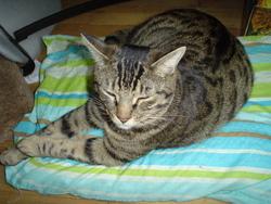 Ippo Kun, chat Gouttière