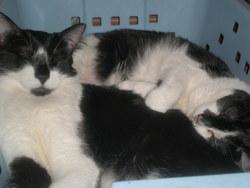 Melou Et Felou , chat Gouttière