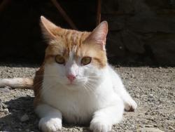 Twix, chat Gouttière