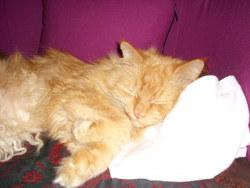 Pilliou, chat Gouttière