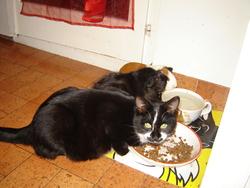 Oby, chat Gouttière