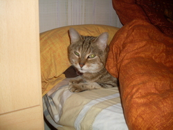 Cleopatre, chat