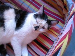 Zounette, chat