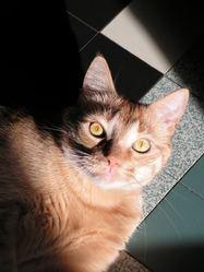 Apollo, chat Gouttière