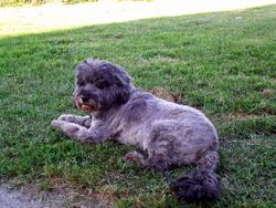 Titou, chien