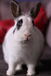 Janine, rongeur Lapin
