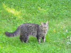 Matt, chat Gouttière