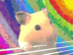 Spiro, rongeur Hamster
