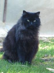 Find, chat Gouttière