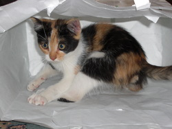 Luiza, chat Gouttière