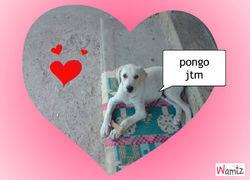 Pongo, chien