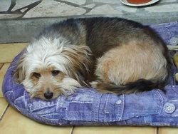 Anais, chien