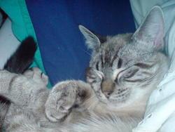 Kénny, chat Gouttière