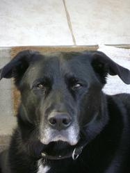 Jerrylee, chien