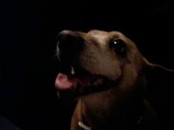 Charlotte, chien