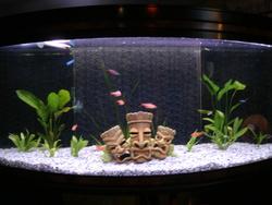 L'aquarium, autres