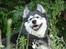 Pénélope, chien