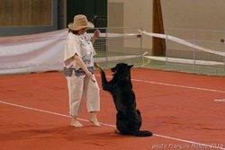 Saga, chien Beauceron
